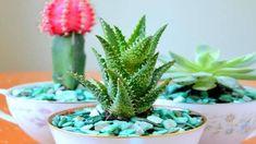 Szívlevelű viaszvirág a pozsgás növények királynője | 24.hu Plants, Plant, Planets