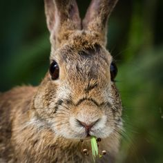 Just had to post this darling bunny photographed by Beverly Everson! :D