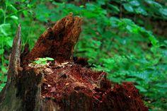 Vanderbilt Estate, Bard Rock Trail - Jon Allweiss - Picasa Web Albums