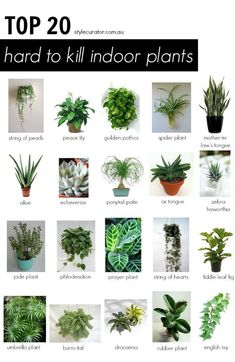 These are the best indoor house plants for people who need a little help keeping their plants alive! No green thumb? That's okay! Green plants are for everyone and help create an indoor oasis.