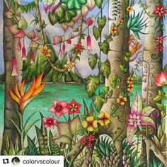 Que espetáculo! By  @colorvscolour with @repostapp#selvamágica  Tropical Paradise  NEW VIDEO is up on my YouTube channel link is in my bio @colorvscolour . #chriscoloring #magicaljungle #johannabasford #secretgarden #enchantedforest #coloringbook #colouringbook #coloring #colouring #adultcoloringbook #coloredpencil #coloredpencils #prismacolorpremier #tropicalisland #paradise #塗り絵 #大人の塗り絵 #livrodecolorir #birdofparadise