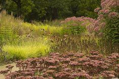 Musings - Oudolf & The New Perennial Movement Different Plants, Types Of Plants, Garden Show, Dream Garden, Vista Landscape, Brooklyn Neighborhoods, Prairie Garden, Wild Grass, Hardy Plants