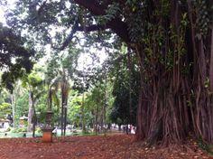Anja in Brasilien: 11 Millionen Menschen. Zement soweit man schauen kann. Und zwischendrin erkämpft sich der Jungle seinen Platz zurück. Wenn man die Stadt jetzt zurücklassen würde, wäre hier in 100 Jahren wieder tropischer Regenwald...
