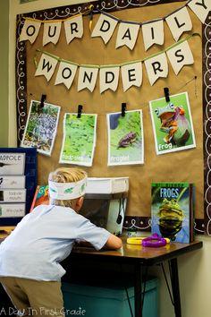 A kindergarten science center where students observe tadpoles Science Center Preschool, Science Inquiry, Primary Science, Kinder Science, Science Table, Science For Kids, Teaching Science, Kindergarten Inquiry, Kindergarten Science Centers
