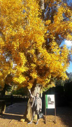 Lindos jardins Alhambra