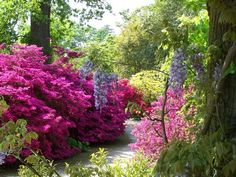 #LoveFlowers garden of the day Enjoy all the beauty from our garden of the day @rhswisley
