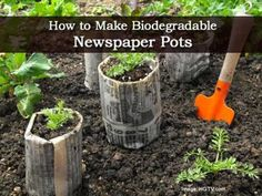 "How to Make Biodegradable Newspaper Pots. Starting seeds and cuttings is a great way to ""grow"" your plants or plant collection with minimal expense. One way to reduce transplant shock is to start plants in peat pots or soil blocks which can be planted directly in the ground. You can make your own biodegradable pots using newspaper. Click on the link below for the tutorial and get planting!"