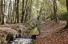 Head to Tehidy Woods, St Ives on your British Roadtrip