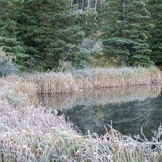 Early morning calm. Oct. 4 2013 Cypress Hills, Saskatchewan, Canada.