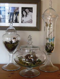 Tips On How To Decorate Glass Bird Cage Terrarium
