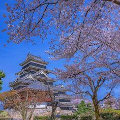 【tsumizo】さんのInstagramをピンしています。 《April,2016 My favorite pic 2016.4.13 post 松本城の桜  日本の4月といえば、やっぱり桜ですよね。 都内では、千鳥ヶ淵の桜が高校生の頃から大好きですし、新宿御苑や六本木ヒルズ、目黒川、井の頭公園の桜もなかなか良かった。 松本では弘法山の桜も素晴らしかったです。 ですが、今回は松本城とのコラボレーションが素敵だったこの写真を選んでみました。  本日から12回、一日3枚~4枚、私の毎月のお気に入り写真を振り返っております。 自己満足の世界ですが、お付き合い頂ければ幸いです。  #Repost @tsumizo ・・・ 長野県松本市・松本城 #MatsumotoCastle #NationalTreasure #CherryBlossoms #SomeiYoshino #FullBloom #Matsumoto #Nagano #Japan #松本城 #国宝 #桜 #染井吉野 #ソメイヨシノ #しだれ桜 #満開 #松本市 #長野県 #Nikon #D750 #instagram…