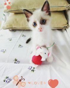 Pastelzinho🐾 #gato #fofo #amor