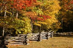 We could spend every fall day in Cades Cove!