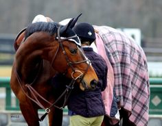 <3Hunter jumper eventing horse equine grand prix dressage equestrian