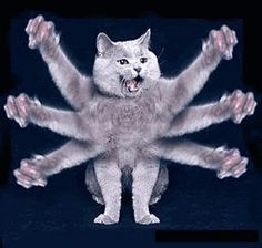 cat with six arms gif