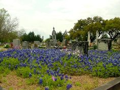 Fayetteville Texas Cemetery  with bluebonnets