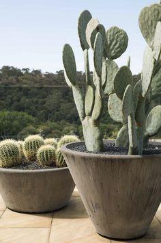 Cactus garden landscaping - 25 Gardens You Haven't Thought – Cactus garden landscaping Cactus House Plants, Cactus Decor, Cactus Art, Gardening Websites, Cactus Plante, Cactus Flower, Flower Bookey, Flower Film, Flower Pots
