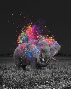 True Colors Elephant Art Print by Soaring Anchor Designs Elephant Wallpaper, Elephant Artwork, Elephant Pictures, Elephant Canvas, Elephant Love, Animal Pictures, Cool Pictures, Canvas Art, Canvas Prints