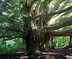 Rain Forest Surprise, Waimoku Falls Trail, Hawaii