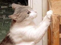 Risultati immagini per foto trasloco gatti