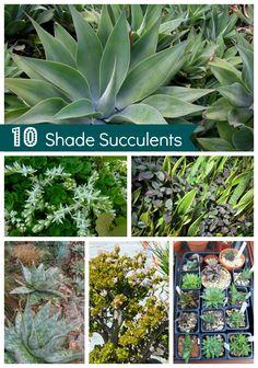 Drought Tolerant Garden - Shade Succulents