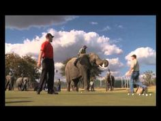 Trevor Fisher Junior gets more than he bargained for when he putts next to an elephant at Zebula Golf Estate World Organizations, Golf Tips Driving, Golf Estate, Natural Contour, Golf Videos, Putt Putt, Stunts, Golf Courses, Elephant