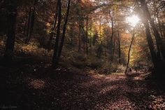 Autumn threnody by Céline Campillo on 500px