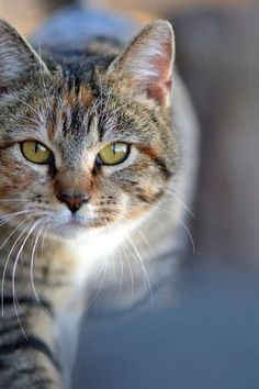 on the prowl #cat #kitten