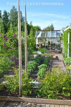 garden and little greenhouse