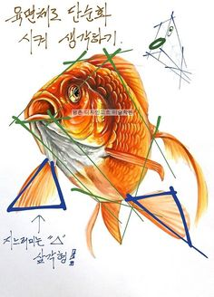 """기초디자인을 위한 개체 표현 """"금붕어""""(상명대학교 기초디자인 제시물) 평촌미술학원 디자인고흐 입시반 자... Food Drawing, Drawing Skills, Drawing Techniques, Watercolor Fish, Watercolor Sketch, Watercolor Paintings, Fish Drawings, Animal Drawings, Koi Painting"""