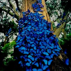 Woww so beautiful! Violet butterflies Woww so beautiful! Violet butterflies Woww so beautiful! Beautiful Bugs, Beautiful Butterflies, Amazing Nature, Beautiful World, Beautiful Places, Beautiful Pictures, Stunningly Beautiful, Absolutely Gorgeous, Beautiful Creatures