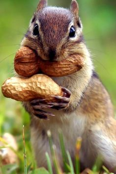 Squirrel Goes Nuts Wallpaper iPhone - Best iPhone Wallpaper