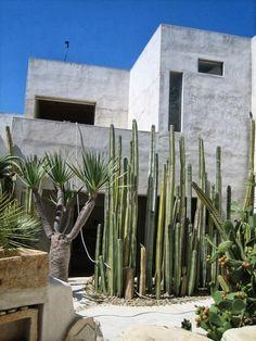 Tour: Philip's Indiana Jones Oasis House Tour: Philip's Indiana Jones Oasis Zakynthos, Dry Garden, Garden Beds, Desert Homes, Venice Beach, Garden Inspiration, Backyard Landscaping, Exterior Design, House Tours