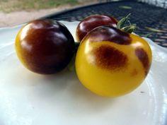 Blue Tomato Bosque Blue Bumblebee ブルートマト・ボスク・ブルー・バンブルビー
