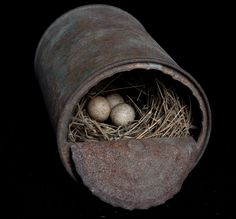 Nest by sharon beals