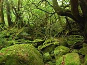 Yakushima (屋久島) is a subtropical island off the southern coast of Kyushu and part of Kagoshima Prefecture. It is covered by an extensive ced...