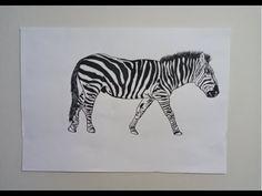 ¿Rayas blancas con negro o negro con blanco? … Conozcamos a la Cebra - Aprender Juntos Animals, White People, Black, Stripes, Animales, Animaux, Animal, Animais, Dieren