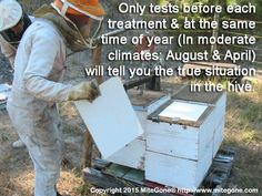 Only tests before each organic honey bee treatment & at the same time of year (In moderate climates: August & April) will tell you the true situation in your hive. Click through to read more about the importance of testing ahead of your chosen treatment. Bee Skep, Beekeeping, Hummingbirds, Bees, Butterflies, Honey, Told You So, Organic, Group