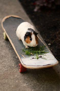 skater piggy