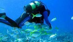 María la Gorda... #Cuba #turismo Atractivas opciones para el buceo en occidente cubano. Con la mayor reserva de coral negro del Caribe, los fondos marinos de María la Gorda atraen hoy a intrépidos buceadores