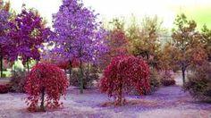 Resultado de imagem para árvores coloridas