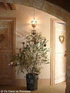 Un Coeur en Provence: L'Olivier de Noël