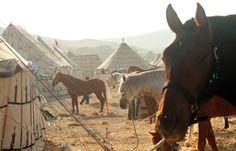 I don't know what I expected, but the horses were stunning. Arabs and Barbs mainly. Unlike Australia where we would use horse floats, the competitors all rode in with their families, and setup their Bedouin tents.