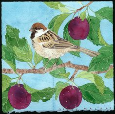 Sparrow and Christmas Plums - SOLD by Gabby MALPAS | PLATFORMstore | Watercolour, gouache and pencil on Arches Paper