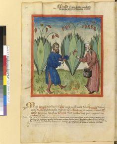 Tacuinum Sanitatis - BNF Ms. Latin 9333 Date: Rhineland, mid- 15th century. fol 17v ?