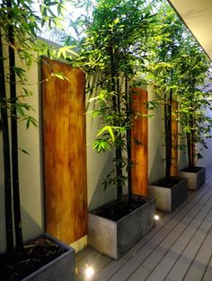 bamboo plants in planters with pebbles | Garden/Outdoor ...