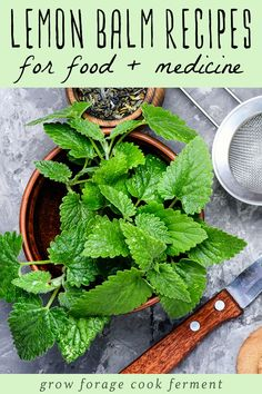 Lemon Balm Recipes: food, drinks, remedies, + more! Got lemon balm? Here are over 30 delicious lemon balm recipes to help you use all of this edible and medicinal herb growing in your yard! Lemon Balm Recipes, Lemon Balm Uses, Herb Recipes, Healing Herbs, Medicinal Herbs, Healthy Eating Tips, Healthy Drinks, Detox Drinks, Lemon Benefits