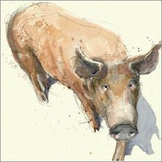 Pig watercolour by artist Alex Egan