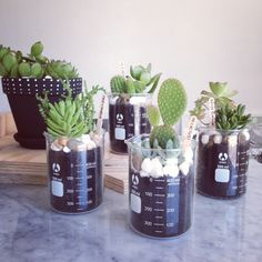 #interior #decor #styling #beakers #plant #succulent #cactus