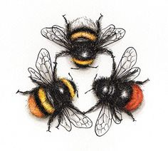 3 Species Bee Triad giclée print pen and ink wall art bees cute summer triangle kitchen art bedroom art gift art print bumble Bumble Bee Tattoo, Bee Drawing, Natur Tattoos, I Love Bees, Bee Art, Insect Art, Bees Knees, Bedroom Art, Sketches